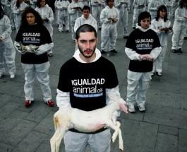 Maltrato: los hombres que no amaban a los animales
